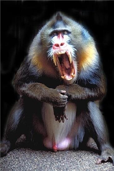 世界10大最珍稀猴族