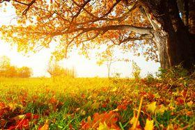 秋冬季节添温暖 家电暖心大行动进行中