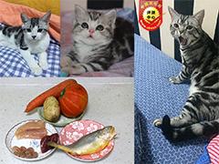 自制猫饭多口味大PK  爱不爱吃猫说的算