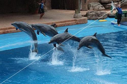 壁纸 动物 海底 海底世界 海洋馆 鲸鱼 水族馆 500_331