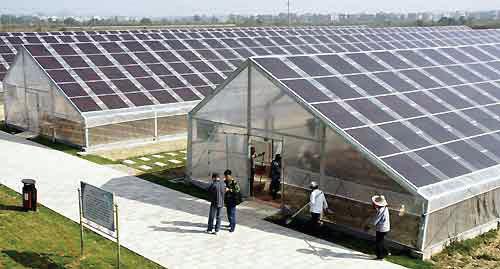 光伏板下种草莓 晶科能源发电种植两不误