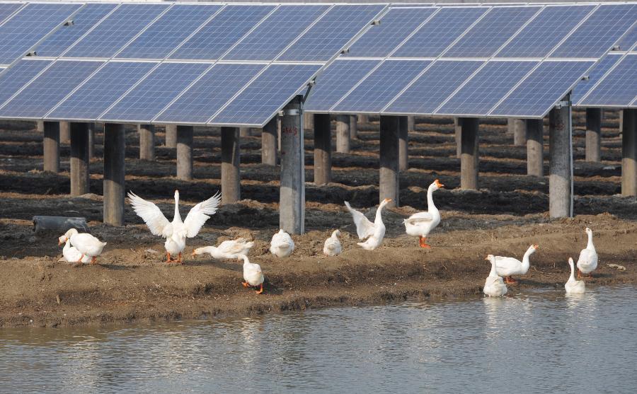 [扬州]最大单体渔光互补光伏电站并网发电