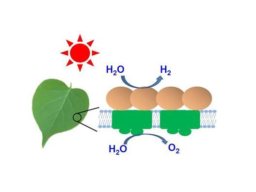 中科院:太阳能分解水制氢取得新进展