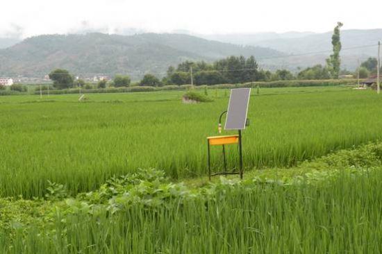 [常山]太阳能电池板下种水稻获成功