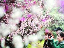 春暖花开 京城花海美景看过来