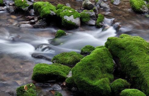 夏季潮湿 净水器长出青苔是什么情况?