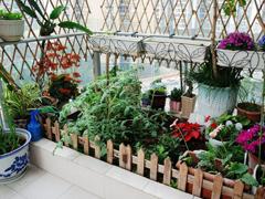 阳台种菜第二弹 插土就能活的好养蔬菜