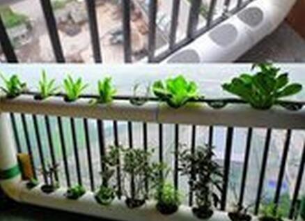 """我的阳台我做主 DIY花盆我的""""把妹""""利器"""