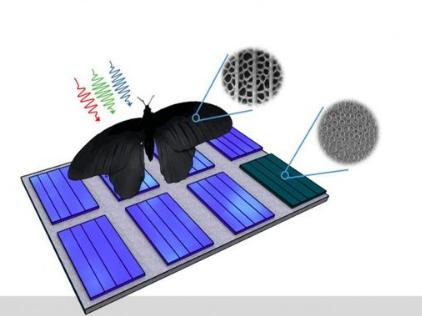 受蝴蝶翅膀启发 科学家开发吸光能力更强的太阳能板