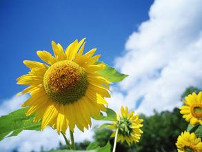 秋冬季节 你与暖阳只差一个空调的距离