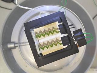 英科学家发明细菌太阳能电池 24小时供电