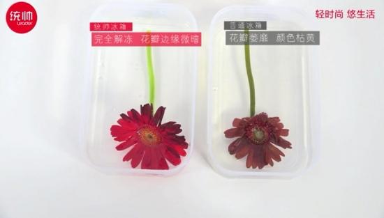 """统帅冰箱 推出""""冷冻鲜花不败""""实验"""
