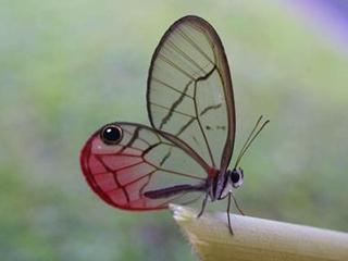 蝴蝶翅膀激发了一种更好的吸收太阳能电池板光线的方法