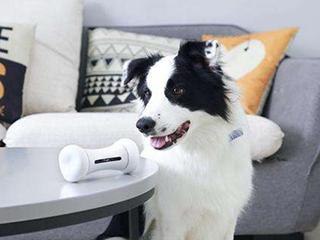 宠物智能家居是一门好生意吗?