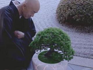 日本盆栽居然搭载AI系统 还能和人聊天