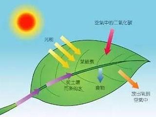 太阳能应用新突破:将二氧化碳转化为燃料