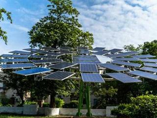 印度开发全球最大的太阳能树