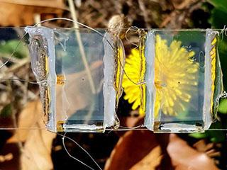 美媒:首款透明太阳能电池可让窗户发电