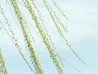 澳柯玛舒适零风感空调,给家清新的春天味道