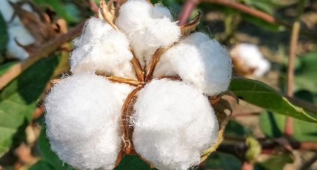 作为优质棉的新疆棉该如何护理?衣物洗护干货这一篇就够了