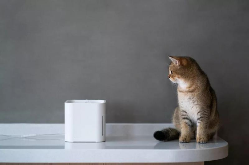"""你会给家里""""主子""""买宠物家电吗?"""