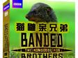 非洲土著绝地生存手记《猫鼬亲兄弟》发行